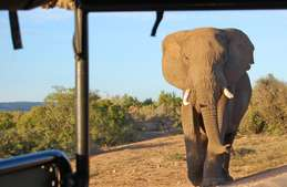 South Africa - Battlefields, Beaches and Safari