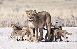Botswana - Family Botswana and Victoria Falls