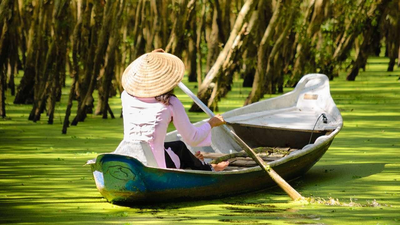 Tra Su Floodede Forest,  An Giang, Mekong Delta, Vietnam