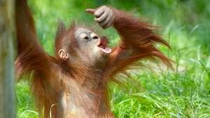 Malaysia- Best of Malaysian Borneo