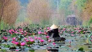 RV Mekong Pandaw (8 days/ 7 nights) Ho Chi Minh to Siem Reap
