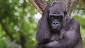 Congo Odzala Explorer
