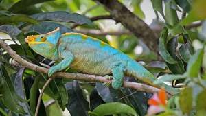 Madagascar - Highlights of Madagascar