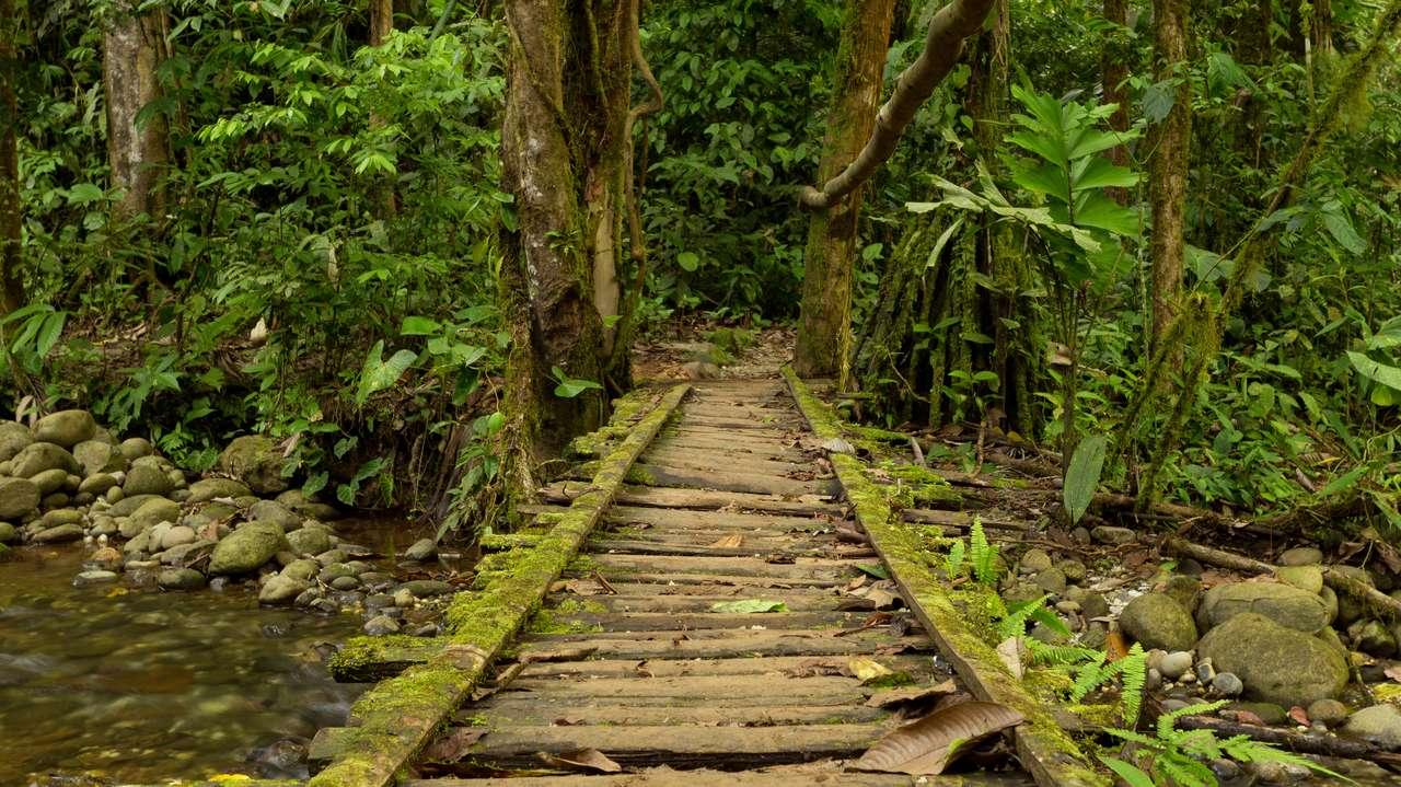Wooden Bridge, Amazon, Ecuador