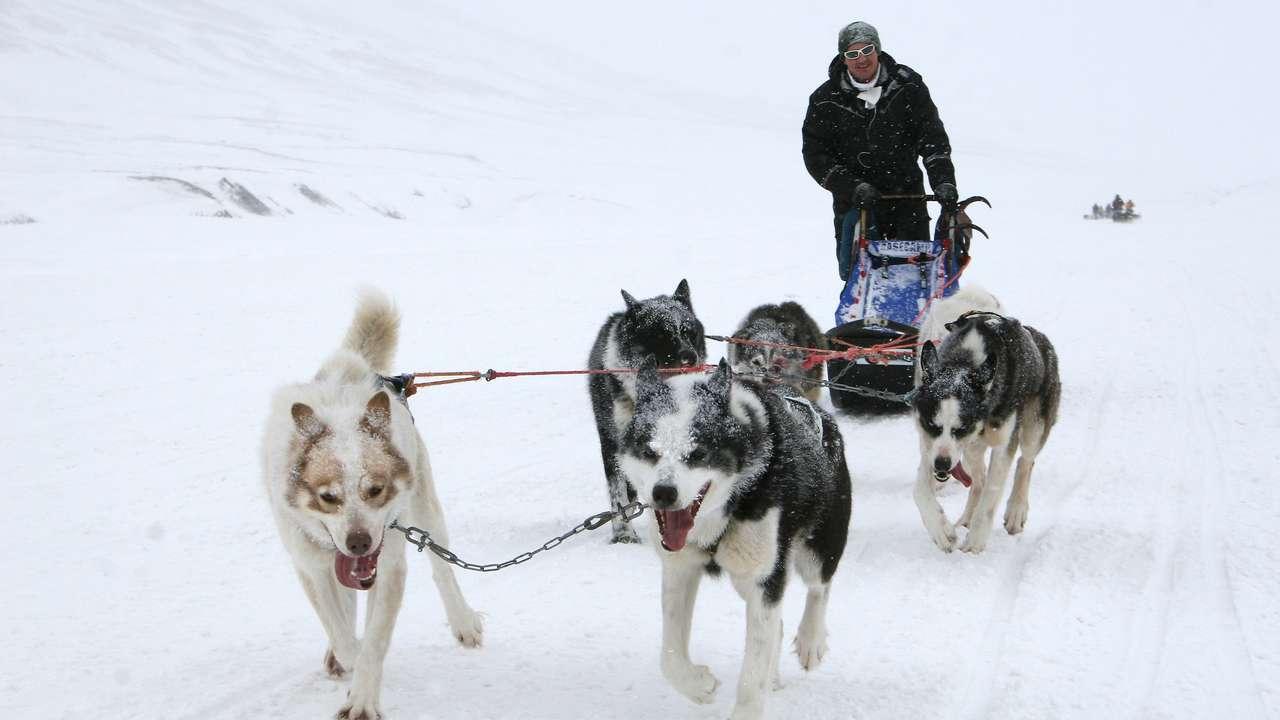 Dog Sledding, Spitsbergen
