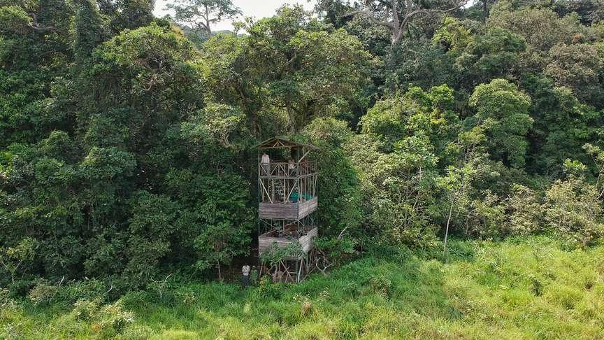 Langoue Bai Platform, Ivindo National Park