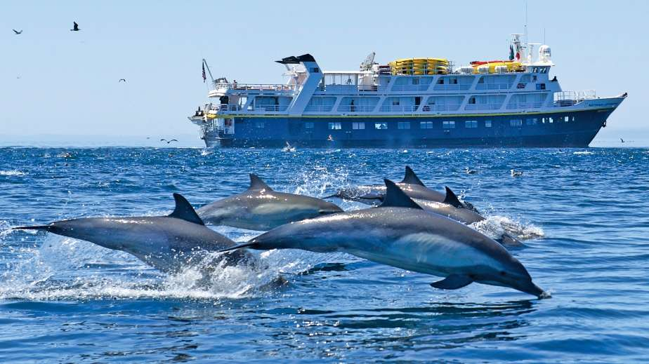 dolphins leaping alongside National Geographic Seabird, Baja California